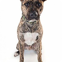 Adopt A Pet :: Ford - Huntington Beach, CA