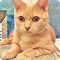 Adopt A Pet :: Mariel - Youngsville, NC