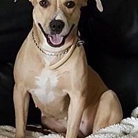 Adopt A Pet :: Lady - Ocoee, FL
