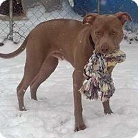 Adopt A Pet :: Willard - Koontz Lake, IN