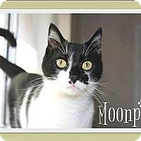 Adopt A Pet :: Moonpie - Fort Worth, TX