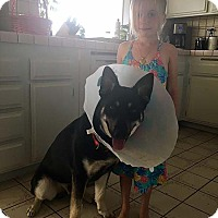 German Shepherd Dog Dog for adoption in San Diego, California - Bruce