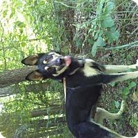 Adopt A Pet :: Rita - Randleman, NC