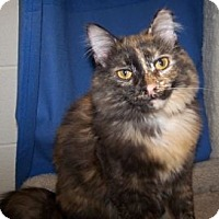 Adopt A Pet :: Peanut - Colorado Springs, CO