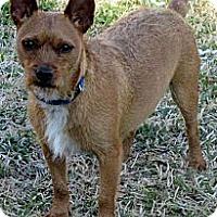 Adopt A Pet :: BUDDY/Perfect Little Dog! - Glastonbury, CT