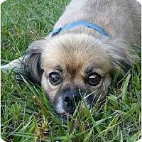 Adopt A Pet :: Shaun - Mocksville, NC