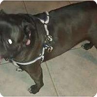 Adopt A Pet :: Friday - Phoenix, AZ