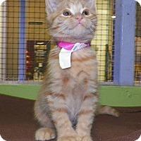 Adopt A Pet :: Muggle - Dover, OH