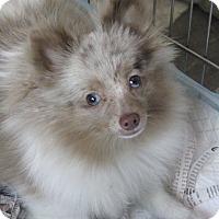 Adopt A Pet :: Kassie - Orange, CA