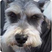 Adopt A Pet :: Cooper - Beachwood, OH