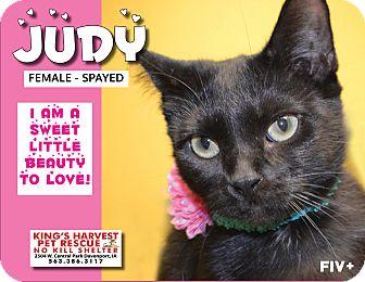 Domestic Shorthair Cat for adoption in Davenport, Iowa - Judy FiV+