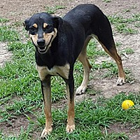 Shepherd (Unknown Type) Mix Dog for adoption in Providence, Rhode Island - Winnie LB CP