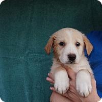Adopt A Pet :: Lexie - Oviedo, FL