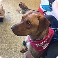 Adopt A Pet :: Ricky - Elyria, OH