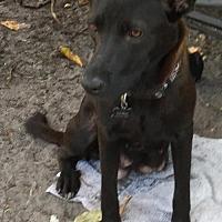 Adopt A Pet :: Hanna - Jupiter, FL