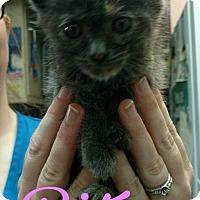 Adopt A Pet :: RITSY - Princeton, WV