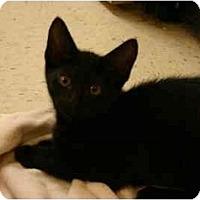 Adopt A Pet :: Licorice - Jenkintown, PA