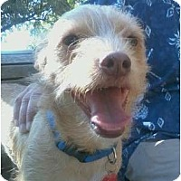 Adopt A Pet :: OLIVER - Houston, TX