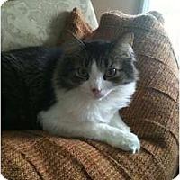 Adopt A Pet :: *Sox - Winder, GA