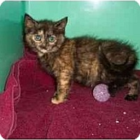 Adopt A Pet :: Martie - Secaucus, NJ