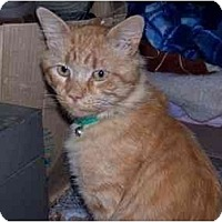Adopt A Pet :: Musterd Seed - Syracuse, NY