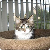 Adopt A Pet :: Mia - Catasauqua, PA