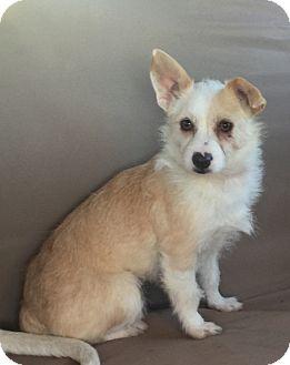 Terrier (Unknown Type, Medium) Mix Dog for adoption in Mount Pleasant, South Carolina - Queenie