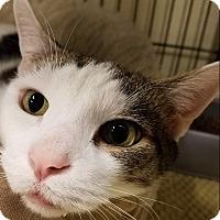 Adopt A Pet :: Mason - Sewaren, NJ
