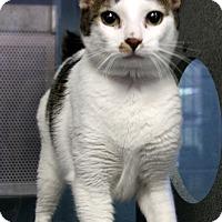 Adopt A Pet :: Sol - Sarasota, FL