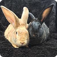 Adopt A Pet :: Marietta & Aberforth - Watauga, TX