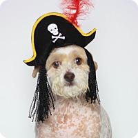 Adopt A Pet :: Henry - Stockton, CA