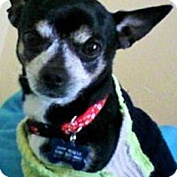 Adopt A Pet :: Chester - Plainview, NY