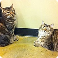 Adopt A Pet :: Chip and Dale - Pittstown, NJ