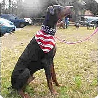 Adopt A Pet :: Grover - Kingwood, TX