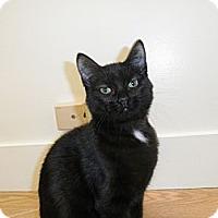 Adopt A Pet :: Neela - Milwaukee, WI