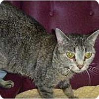 Adopt A Pet :: Patty - Hamburg, NY