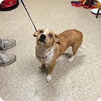 Adopt A Pet :: Monte - Sugar Land, TX