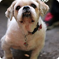 Adopt A Pet :: Sherman - Tinton Falls, NJ