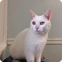 Adopt A Pet :: Luna Lovegood - Chicago, IL