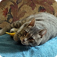 Adopt A Pet :: Lenny - Gaithersburg, MD