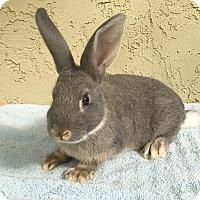 Adopt A Pet :: Thumper - Bonita, CA