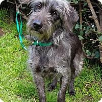 Adopt A Pet :: Hildy - Los Angeles, CA