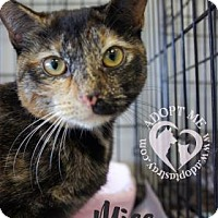Adopt A Pet :: Miss Bianca - Newport, KY