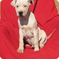 Adopt A Pet :: Heath - Providence, RI