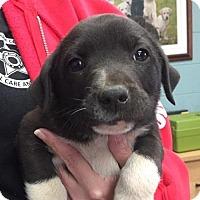 Adopt A Pet :: Dom - Grafton, WI