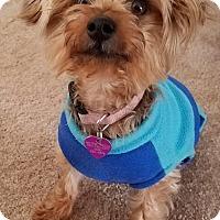 Adopt A Pet :: Olivia - Covina, CA