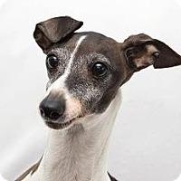 Adopt A Pet :: Beep - Cumberland, MD