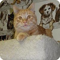 Adopt A Pet :: Rocky - Phoenix, AZ