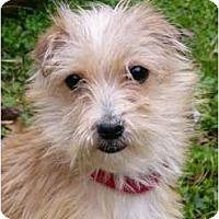 Adopt A Pet :: Moses - Mocksville, NC
