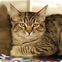 Adopt A Pet :: Brother - Modesto, CA